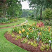 Bell's Daylily Garden