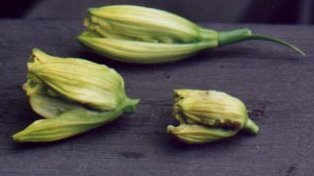 Normal bud above, two affected buds below.