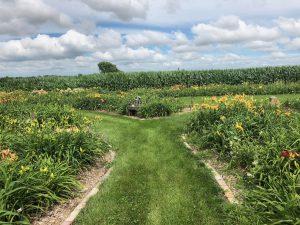 Roth Daylily Farm